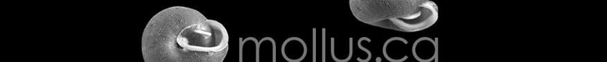 mollus.ca
